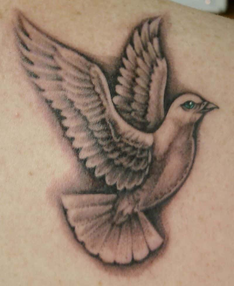 Grey Ink Dove Tattoo Image